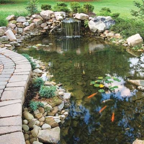 Backyard Pond 19