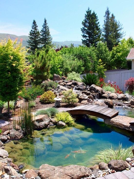 Backyard Pond 21
