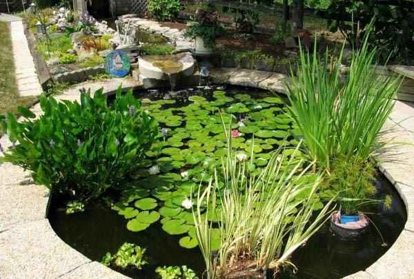 Backyard Pond 23