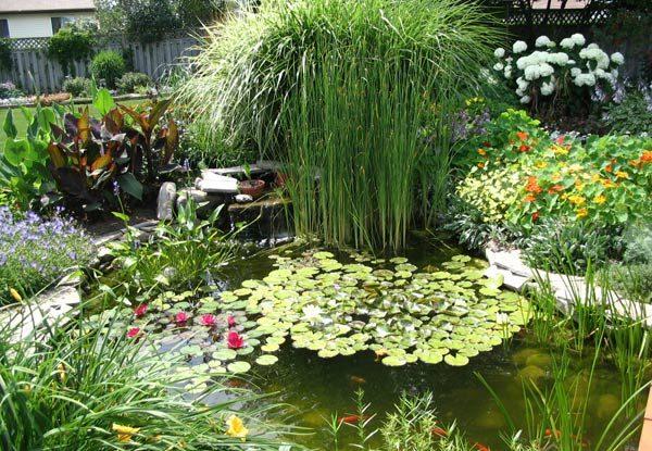 Backyard Pond 24