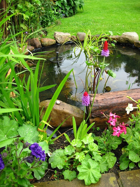 Backyard Pond 8