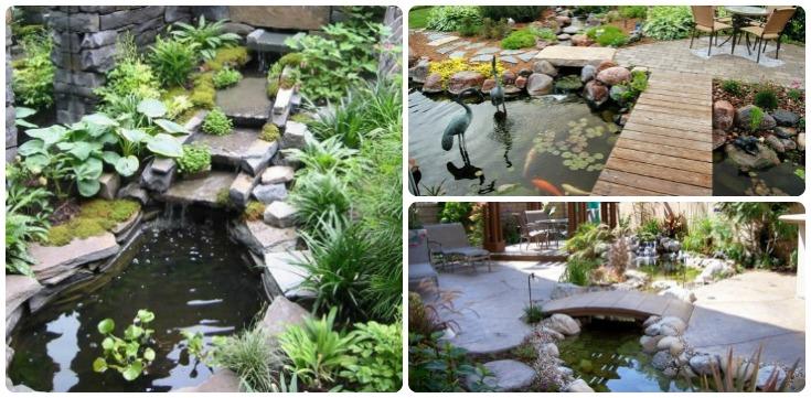 Backyard Pond Feat