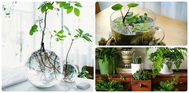 Build Your Indoor Mini Garden Look At These 10 Smart Ideas