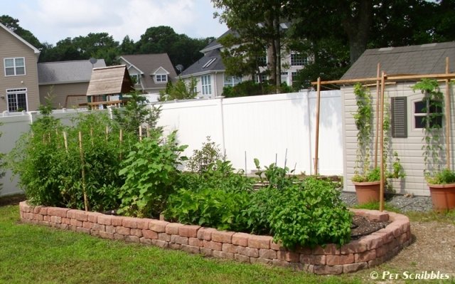 Raised Garden Beds 14
