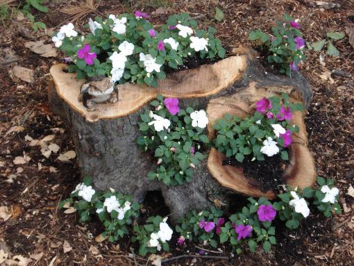 Tree Stump 4