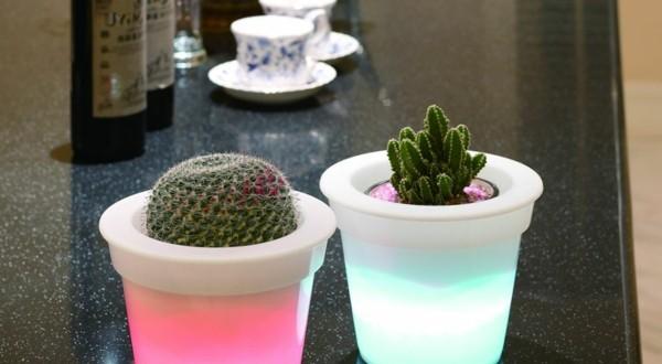 Illuminated Planters 14