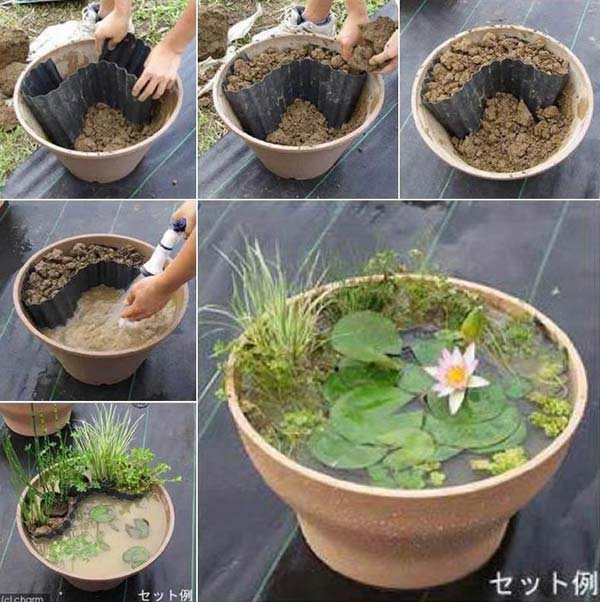 Pond In Pot 1