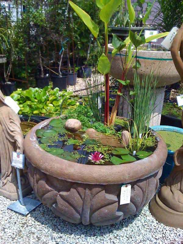 Pond In Pot 13
