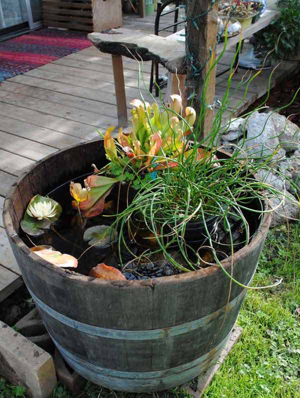 Pond In Pot 2