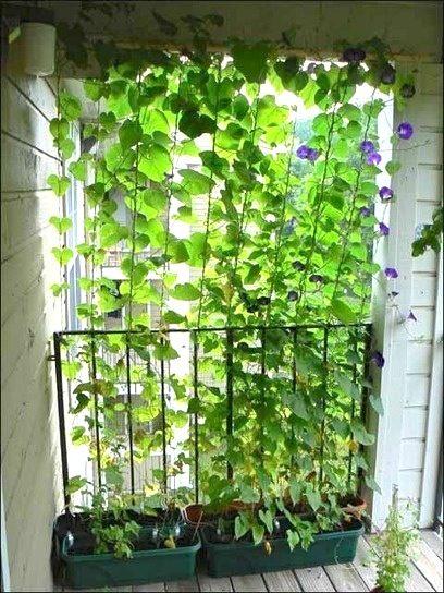 Source: Garden Cams