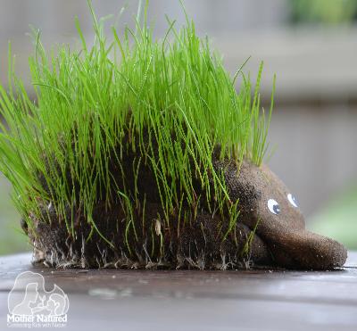 Hedgehog Planters 6