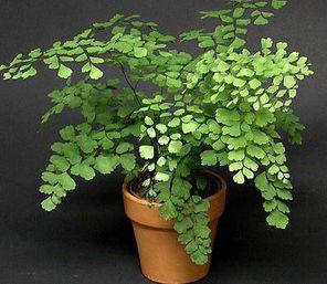House Plants 4