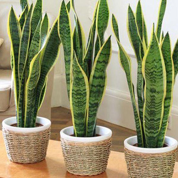 House Plants 5