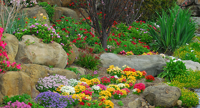 Rock Gardens 10