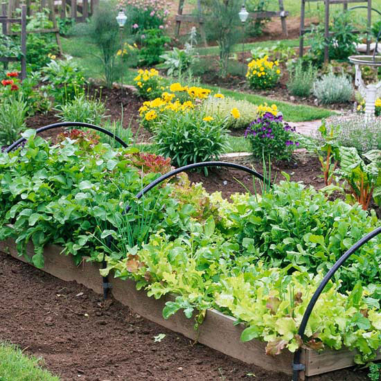 12 Amazing Ideas For Flower Beds Around Trees: Look At These 12 Unique & Fun Raised Garden Bed Ideas