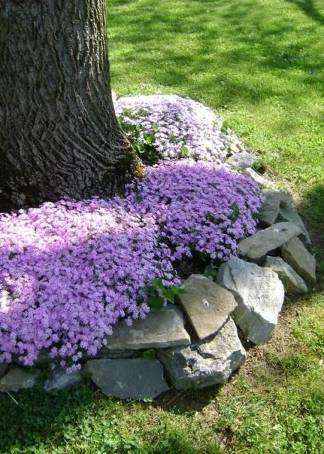 Flowers Around Trees10
