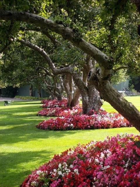 Flowers Around Trees13