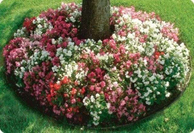 Flowers Around Trees4