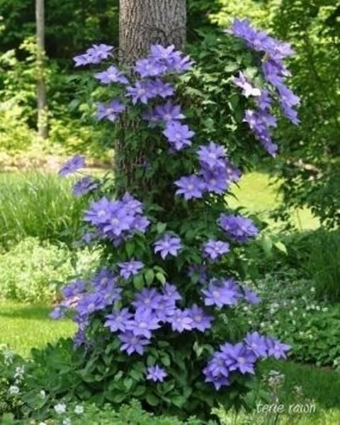 Flowers Around Trees9