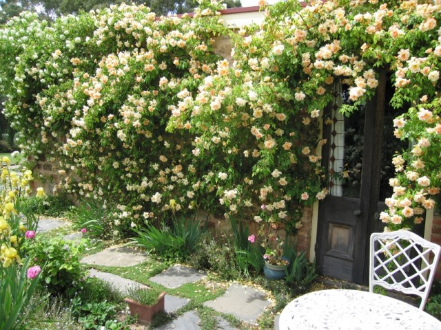 Grow Climbing Roses Add Beauty Amp Style To Your Garden