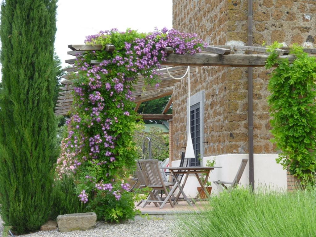 Viñas para su jardín o paisaje | Granja perenne del estado de la bahía