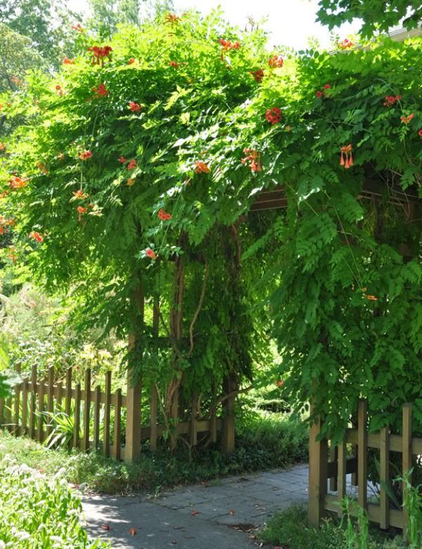 pergola-plants-8