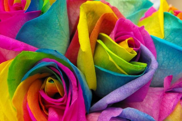 rainbow-roses-2