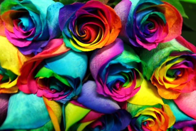 rainbow-roses-6