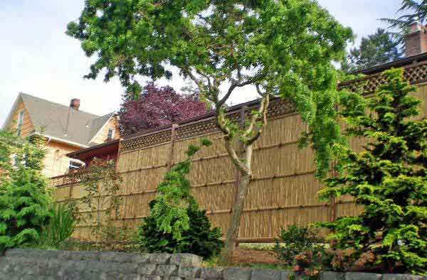 bamboo-fence-9
