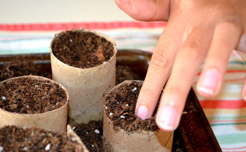 toilet-rolls-garden-3