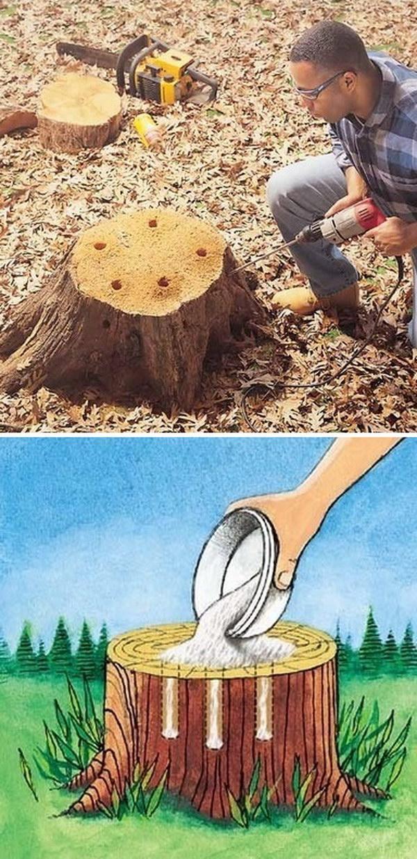 2-Tree-Stump-Removal
