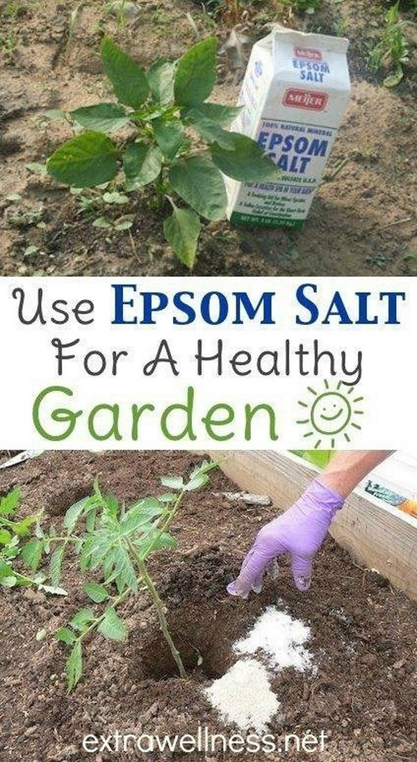 8-Use-Epsom-Salt-at-the-Planting-Stage-to-Aid-Seed-Germination