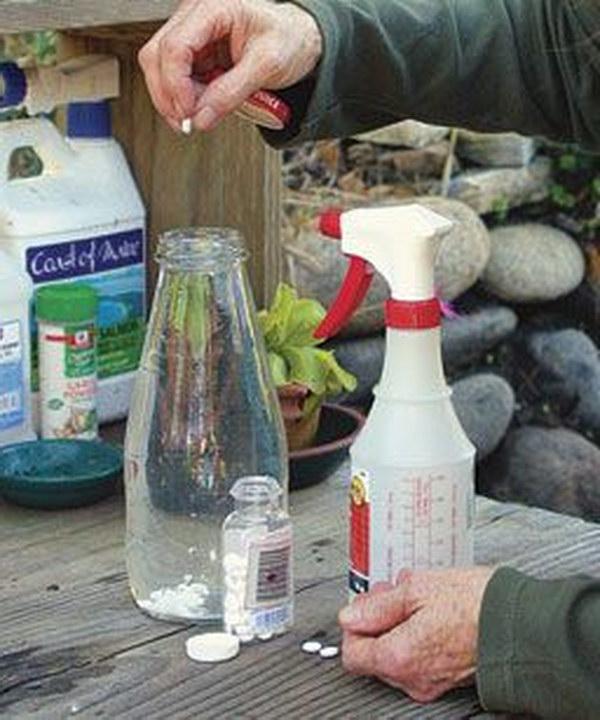 21-Use-An-Aspirin-Foliar-Spray-To-Combat-Black-Spot-Powdery-Mildew-And-Rust