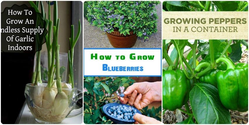 Grow Veggies Indoor