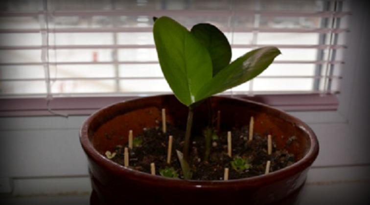 Matches Plants Pot