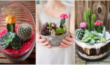 Love Succulents? Then You Must Build At Least One Of These 20 Marvelous Mini Gardens!