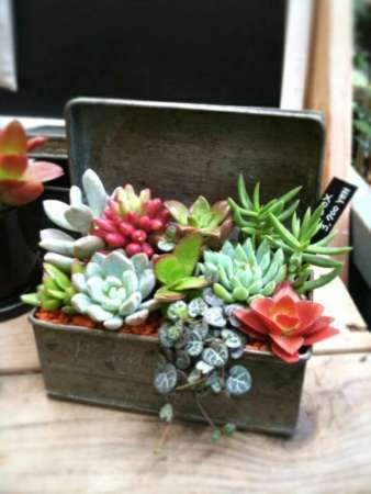 potted-plants-potted-succulent-wood-box