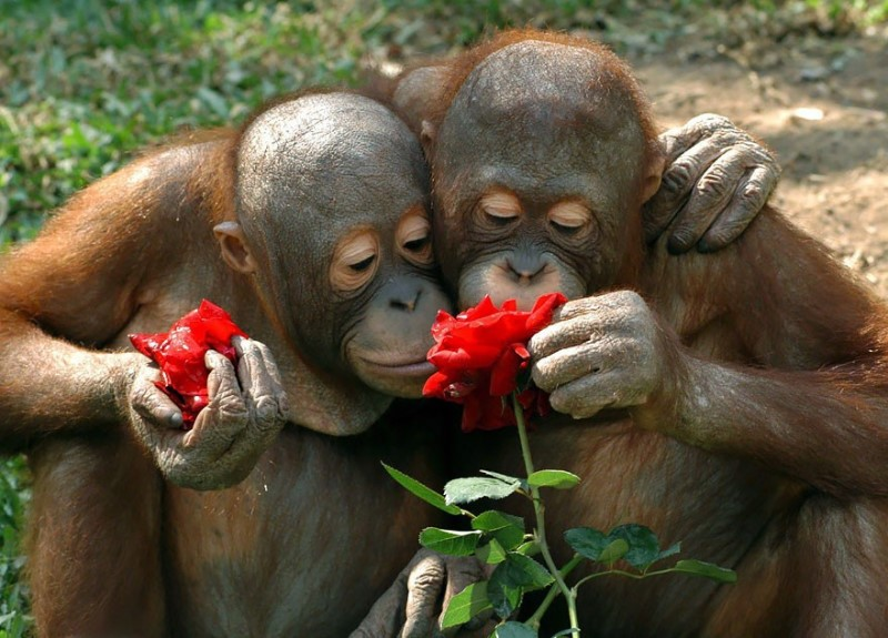 Animal Sniffing Flowers 10