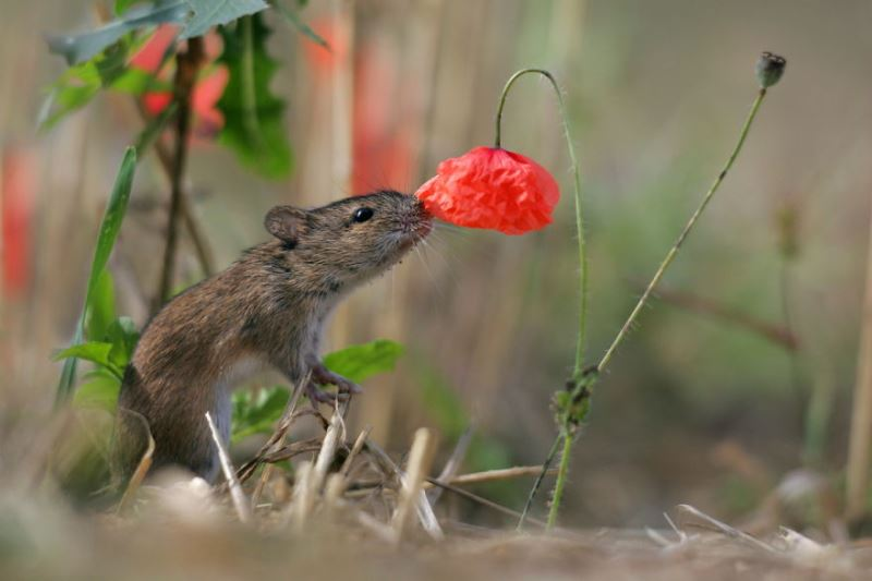 Animal Sniffing Flowers 12