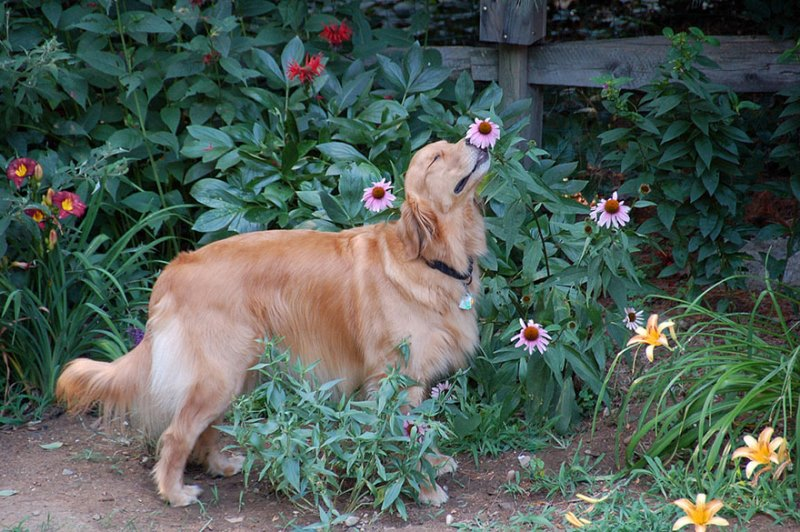 Animal Sniffing Flowers 14
