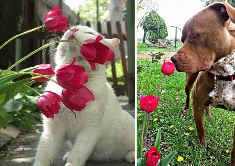 Animal Sniffing Flowers 15