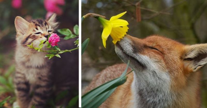 Animal Sniffing Flowers 16