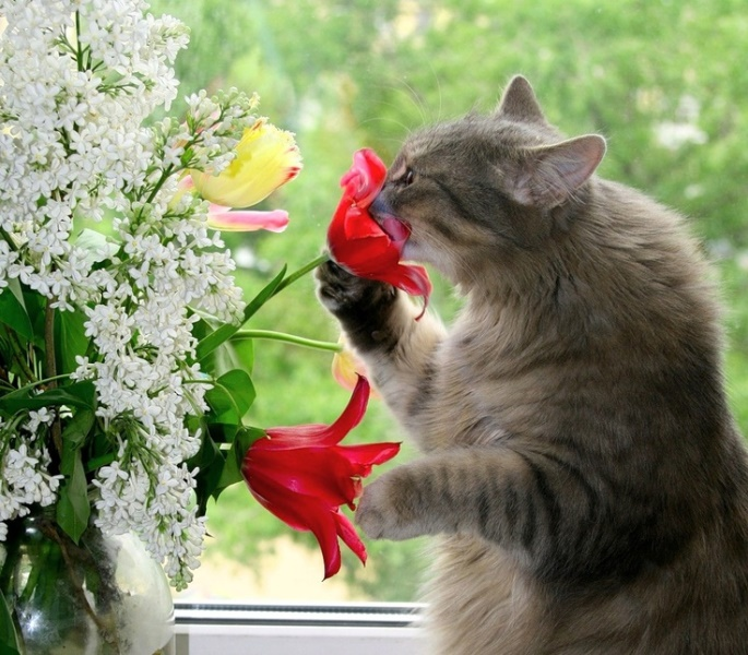Animal Sniffing Flowers 19