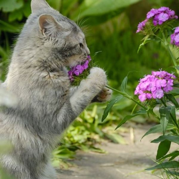 Animal Sniffing Flowers 2