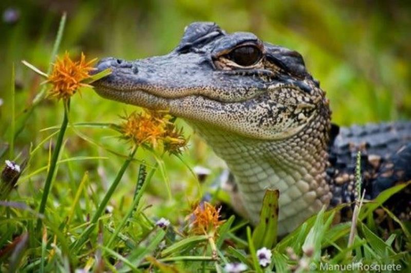 Animal Sniffing Flowers 20
