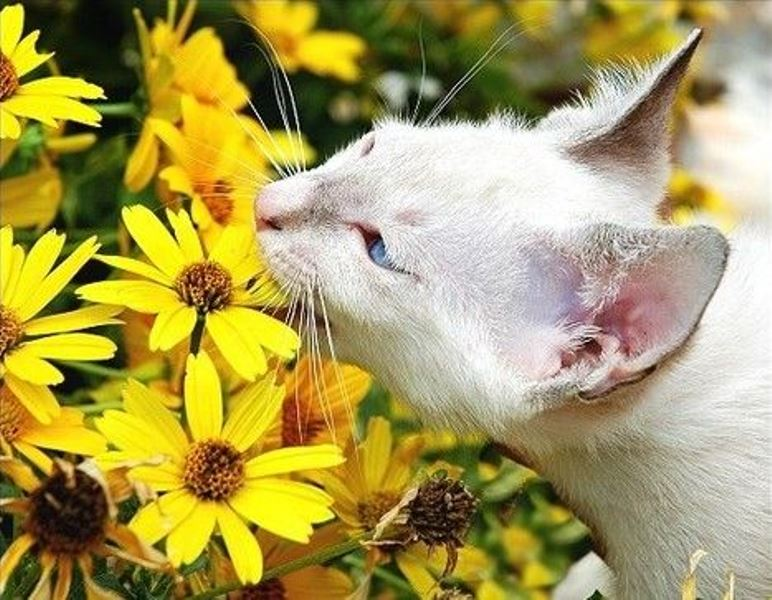 Animal Sniffing Flowers 21