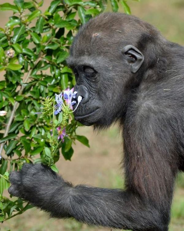 Animal Sniffing Flowers 22