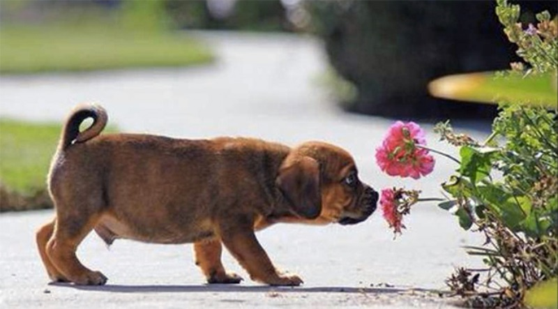 Animal Sniffing Flowers 23