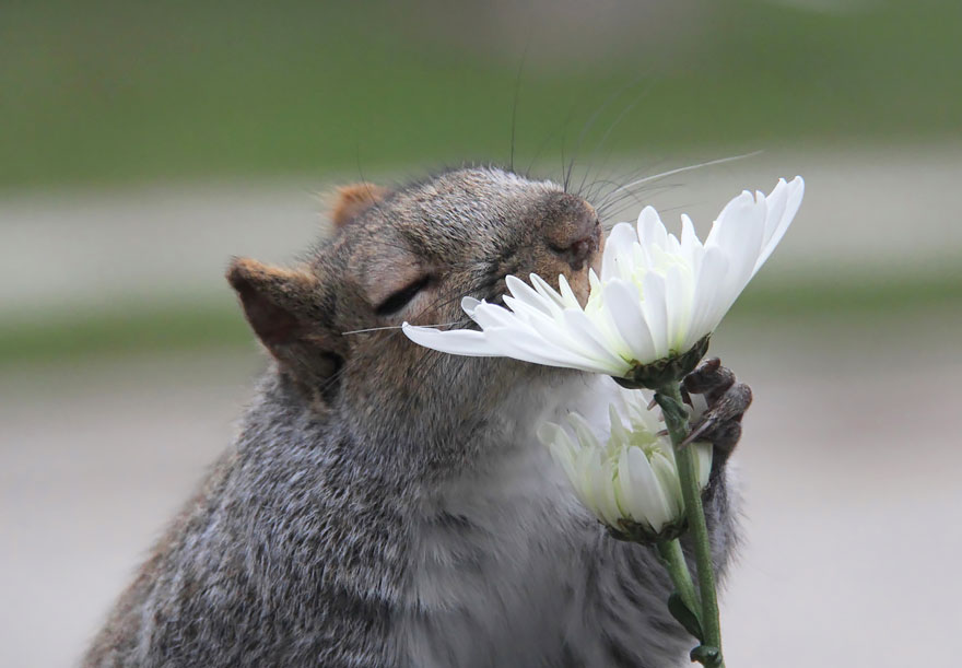 Animal Sniffing Flowers 25