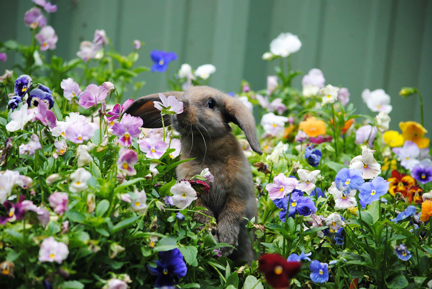 Animal Sniffing Flowers 26
